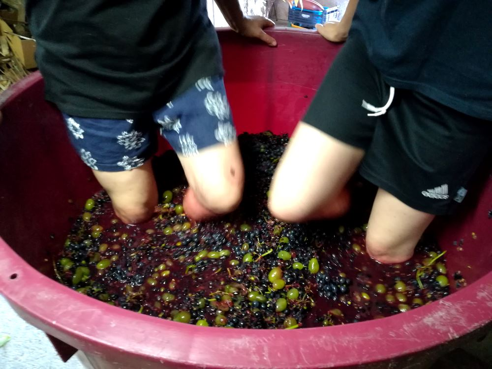 Stomping on grapes